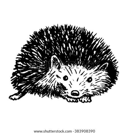 Hedgehog sketch - vector - stock vector