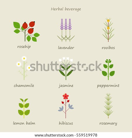 herb healing leaf grass nature vector illustration flat design