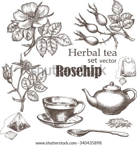 Herbal tea  set. Rose hip tea. Hand drawn.  Chalkboard background. - stock vector