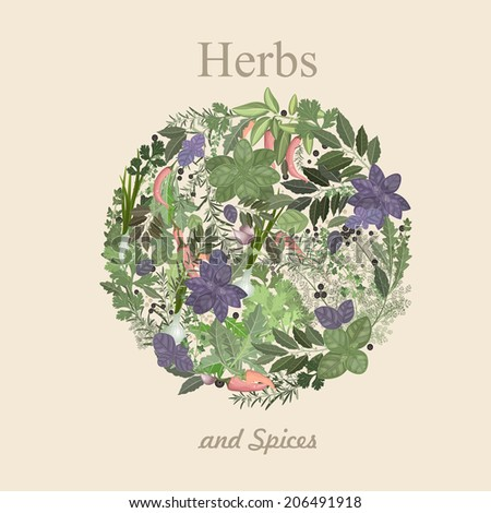 herbs and spices  - stock vector