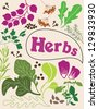 herbs and spices card. vector illustration - stock vector