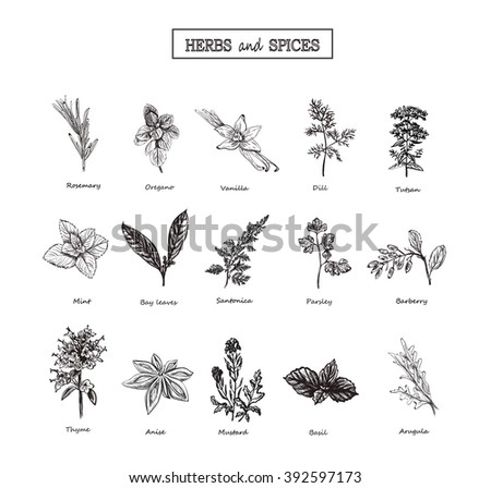 Herbs and spices / herbs and spices art / herbs and spices EPS / Herbs and Wild Flowers / Botany herbs and spices 15 Set /  Vintage herbs and spices flowers  /  Herbs and spices black and white/ herbs
