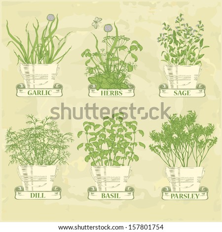 herbs in pot, garlic, parsley, dill, sage and basil, herbal vintage background - stock vector