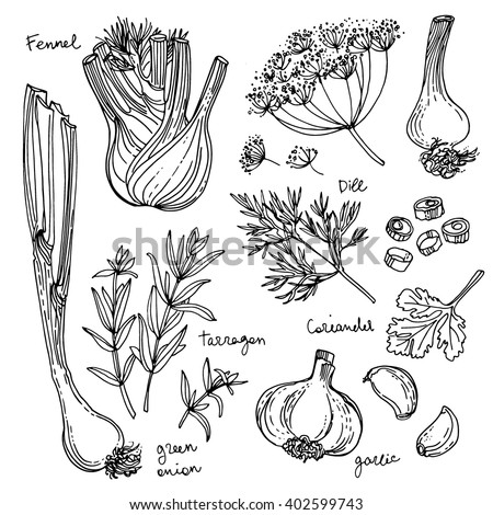 herbs coloring pages - photo#22