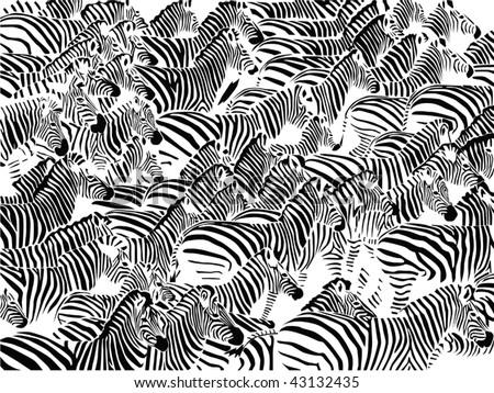 Herd of zebras vector - stock vector