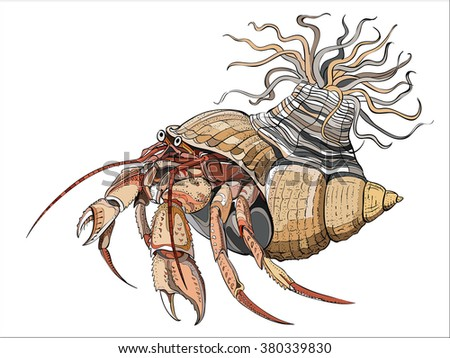 Hermit crabs are decapod crustaceans of the superfamily Paguroidea, 