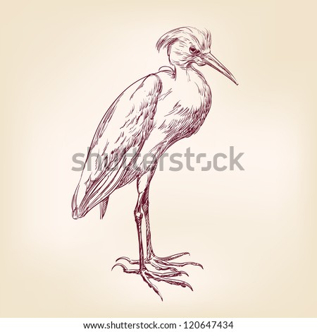 Heron hand drawn vector llustration realistic sketch