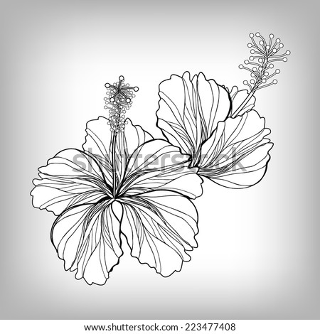 Hibiscus flower drawing. Elements for design, EPS10 Vector background - stock vector