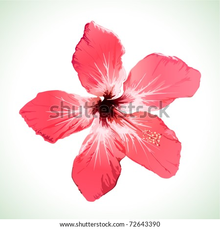 Hibiscus flower vector illustration, red beautiful plant on white background - stock vector