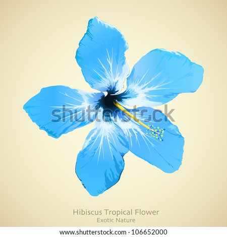 Hibiscus flower vector illustration. Tropical background design - stock vector