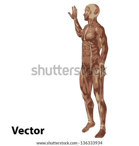High resolution concept or conceptual human or man 3D anatomy body with muscle isolated on white background as a metaphor to medicine,sport,male,muscular,medical,health,biology or fitness