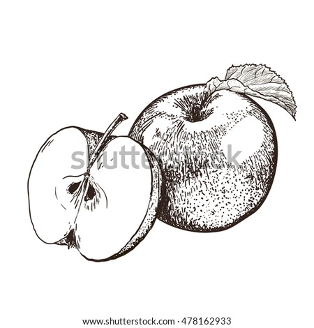 Highly detailed hand drawn apples. Half of apple and whole apple with leaf. isolated