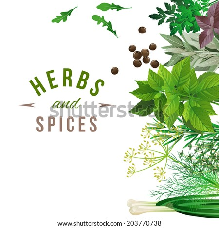 Highly detailed herbs and spices over white background - stock vector