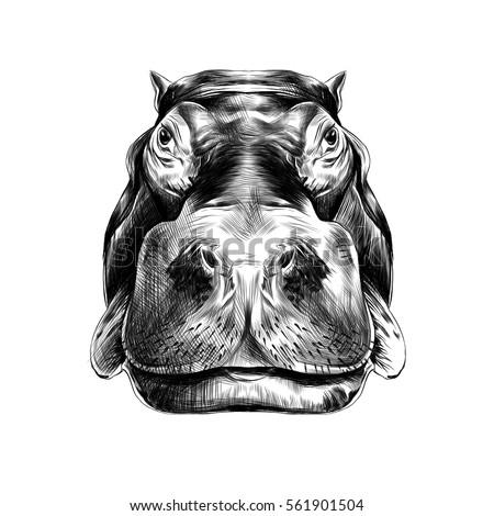 Hippo Teeth Stock Vectors, Images & Vector Art | Shutterstock  Hippo Teeth Sto...