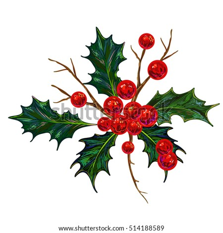 holly berry sketch vector illustration botanical stock vector
