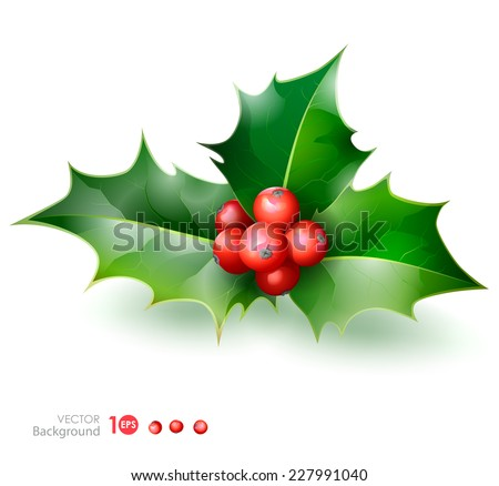Holly. Christmas Holly Berry. Vector  EPS 10. - stock vector