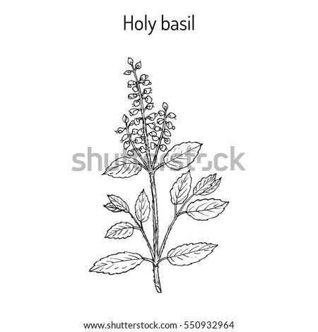 Best Herbal Remedies Dementia Hand Drawn 554292502