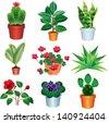 home plants vector set - stock vector