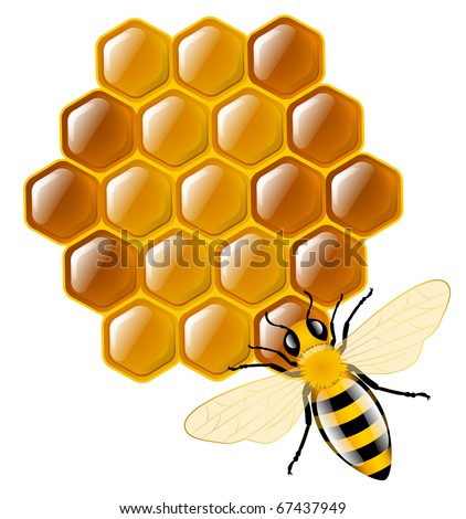 Honey bee and honeycombs - stock vector