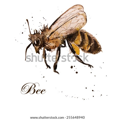 honey bee, watercolor, isolation on a white background. Hand drawing. Vector. - stock vector