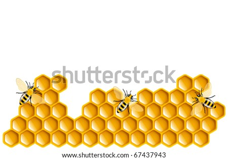 Honey bees and honeycombs - stock vector