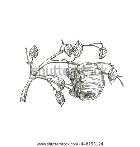 Honey From Beehive Wooden Hive Illustration In A Sketch Style Background On The