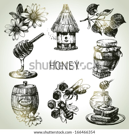 Honey set. Hand drawn vintage illustrations - stock vector