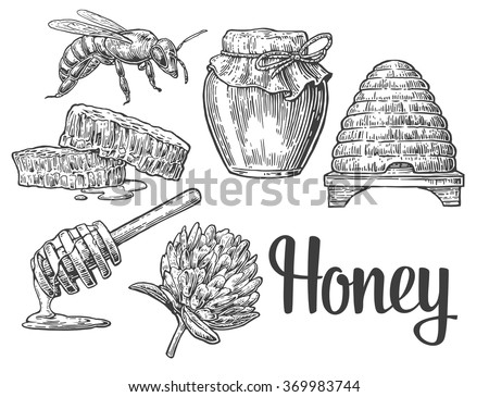 Honey set. Jars, bee, hive, clover, honeycomb. Vector vintage engraved illustration. - stock vector