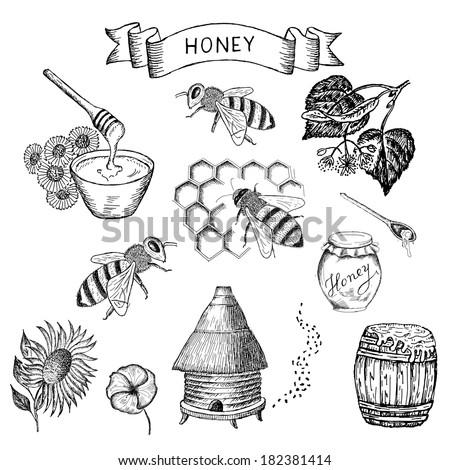 honey. set of vector sketches - stock vector