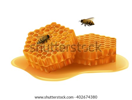 Honeycombs in the shape of hexagon, puddle of honey, flying bee, sitting bee. Vector illustration on white background.
