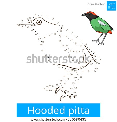 Hooded Pitta Learn Birds Educational Game To Draw Vector Illustration