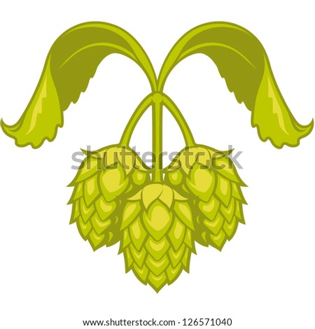Hops vector visual graphic icon or logo, ideal for beer, stout, ale, lager, bitter labels & packaging  etc. - stock vector