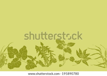 Horizontal seamless pattern various common herbs and weeds, which are used in medicine and cosmetology - stock vector