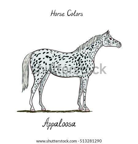 Horse Color Chart On White Equine Appaloosa Coat With Text Equestrian Scheme