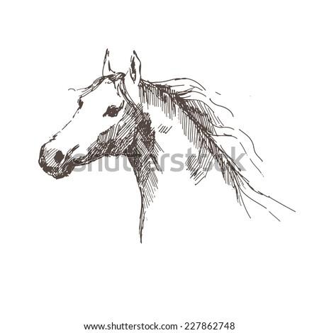 Horse - hand draw. Vector illustration. - stock vector