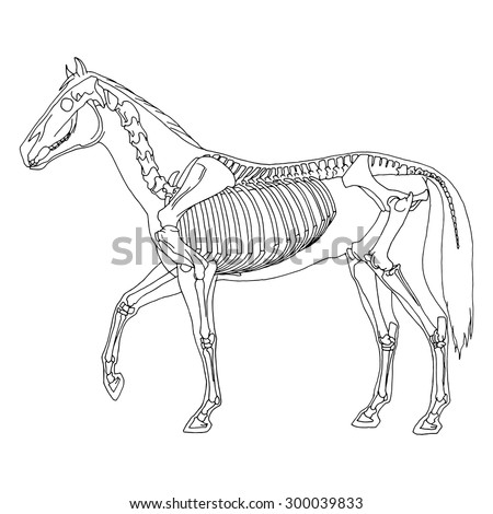 how to grow skeleton horse