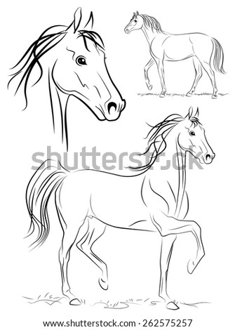 Horse. Vector drawing.
