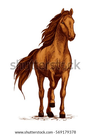 Horse vector sketch. Arabian mustang standing on ground and stomping or stamping with hoof. Brown wild or farm stallion for equestrian racing sport, horse riding races club, equine exhibition
