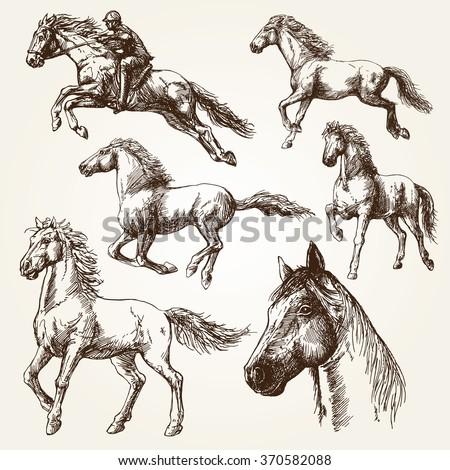 Horses. Hand drawn set. - stock vector