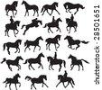 horses vector - stock vector