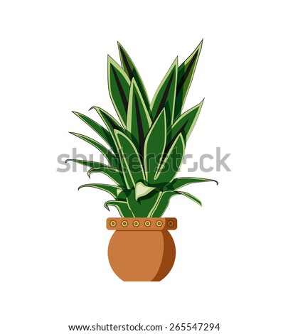 House plant isolated with green long leaves in three different colors and a round terracotta pot decorated with small white circles isolated on white background.