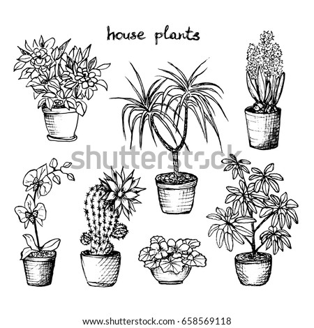house plants drawing. house plants set of 7 handdrawn drawing t