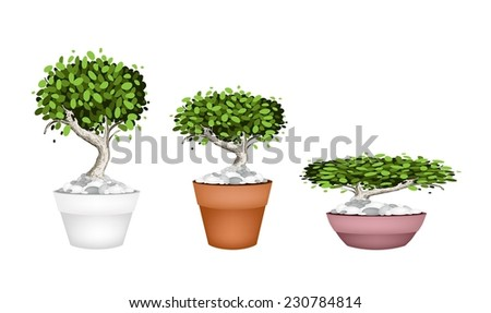 Houseplant, Illustration Collection of Beautiful Bonsai Tree or Small Plants in Flowerpots for Garden Decoration.