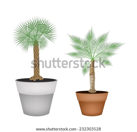 Houseplant, Illustration of Landscaping Tree Symbols of Two Isometric Palm Trees in Terracotta Flower Pots for Garden Decoration.