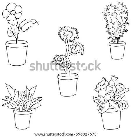 house plants drawing. houseplants sketch by hand pencil drawing vector image the house plants