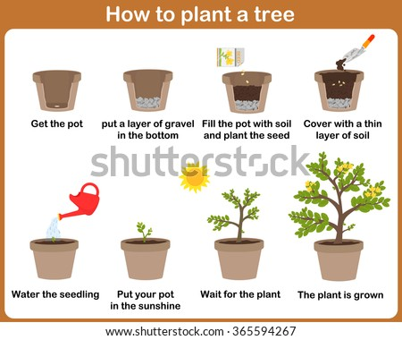 Plant Growth Stock Photos Royalty Free Images Amp Vectors