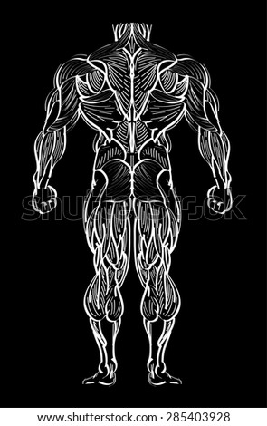human anatomy and muscle - hands sketch vector illustration