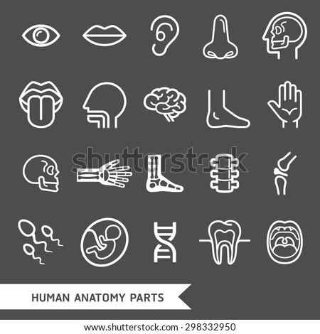 Human anatomy body parts detailed icons set. Vector illustration - stock vector