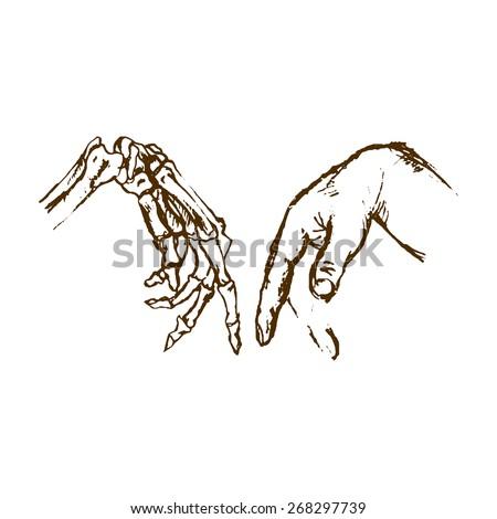 Human Anatomy Hand Skeleton Hand Bones Stock Photo Photo Vector