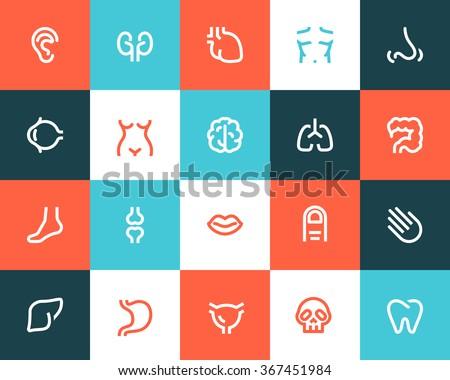 Human anatomy icons. Flat style - stock vector